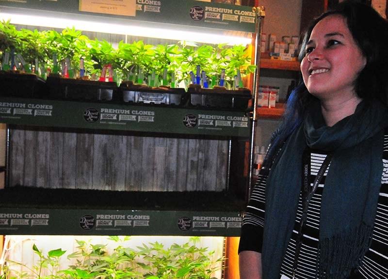 Christine Bordenave, general manager of Torrey Holistics, speaks about the marijuana plants for sale.