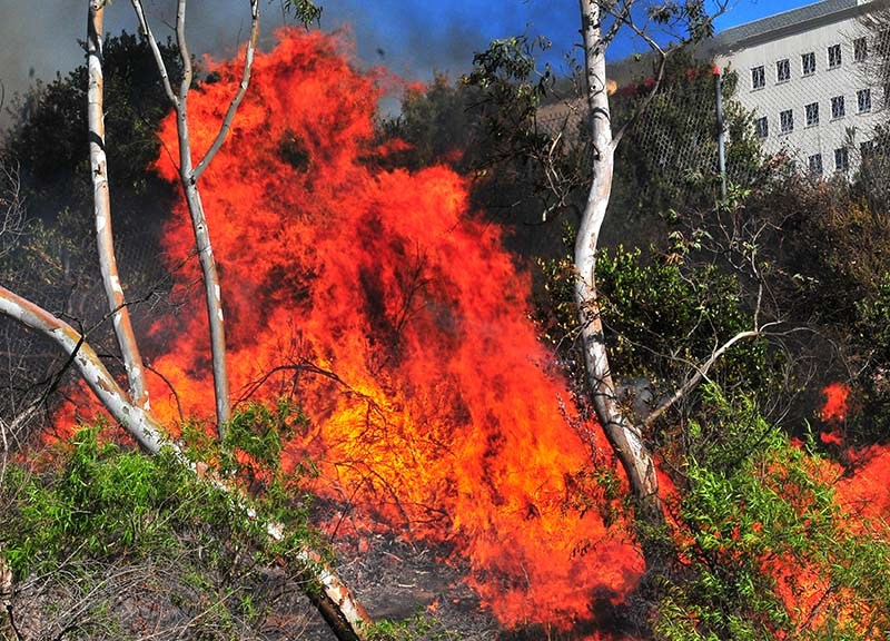 A fire blazes among trees and grasses near I-8 and a housing development n Del Cerro.