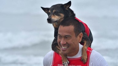 Abby the dog sits on the shoulders of Mike Uy after competition.