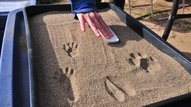 Visitors could see common footprints found in the marsh reserve.