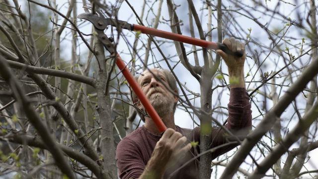 Alan Haight, 62, prunes apple trees at Riverhill Farm in Nevada City