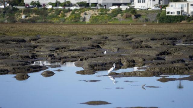 Tidelands on Mission Bay