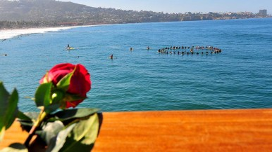 Flowers include this rose were tossed into the ocean during the paddle out for ocean scientist Walter Munk who died in February.