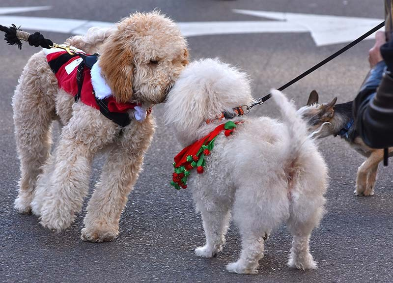 Rubbing noses was canine etiquette for some in the pet parade.
