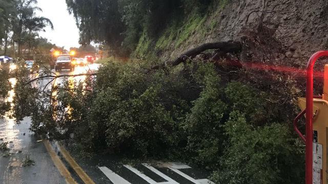 Tree down in Talmadge