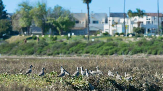 Mission Bay wetlands