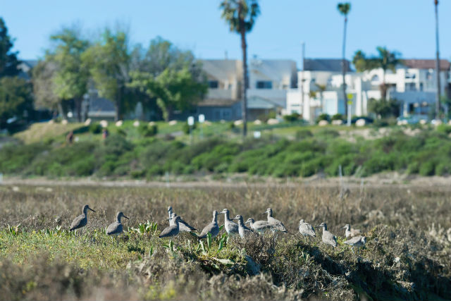 Mission Bay wetlands