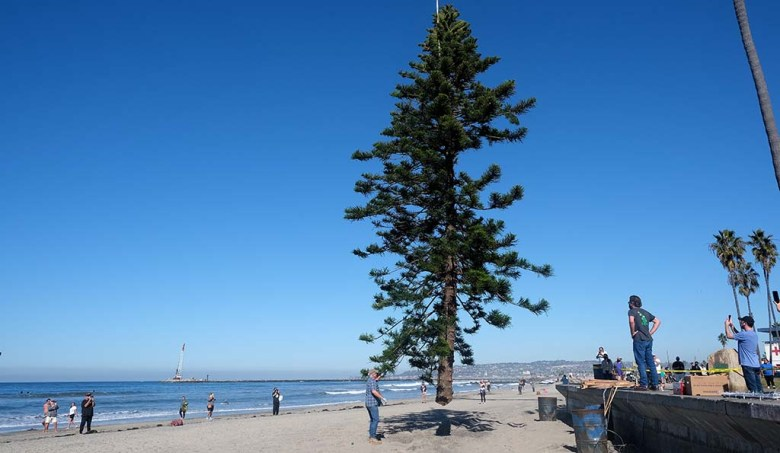 The tree is slowly lowered into a permanent hole on Ocean Beach. The hole is covered with a metal plate the rest of the year.