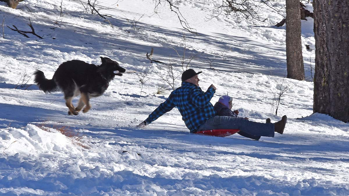 A dog with a stick in its mouth chases after a father with a toddler skidding down the icy hill in Mt. Laguna.