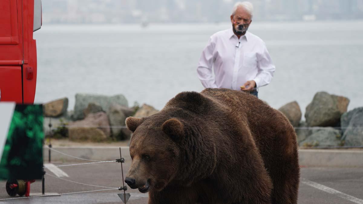San Diego businessman John Cox who is running in the gubernatorial race follows a 1,000-pound Kodiak bear.