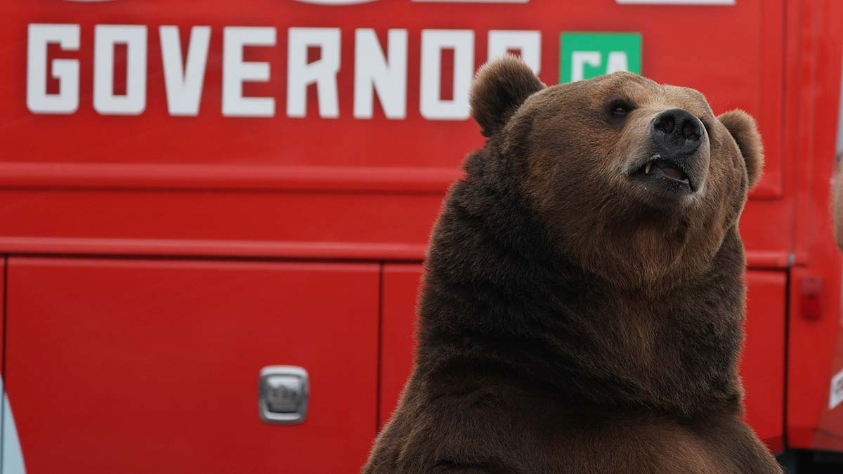 Tag, the 1,000-pound Kodiak bear, makes his second appearance with gubernatorial candidate John Cox.