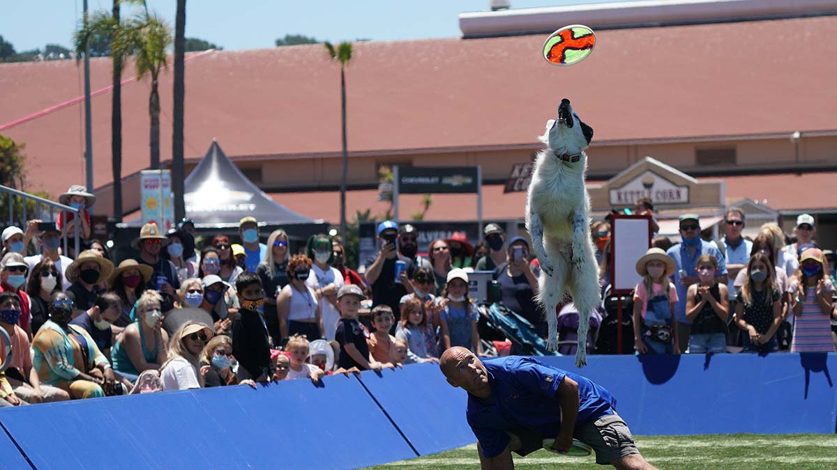 The Extreme Dog show features frisbee catching and agility. Photo by Chris Stone