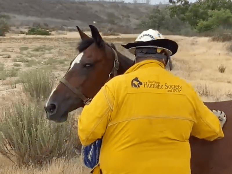 the rescued horse