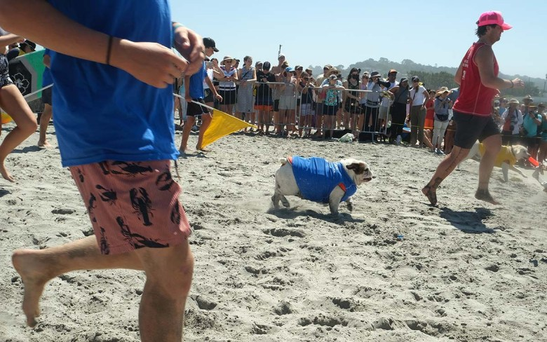 Medium-sized dogs sprint for the surf at the Surf Dog Surf-a-thon in Del Mar. Photo by Chris Stone