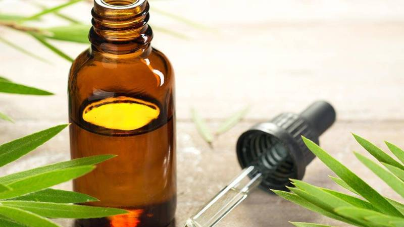 Tea Tree Oil Benefits, Five Uses of Tea Tree Oil in Your Daily Life