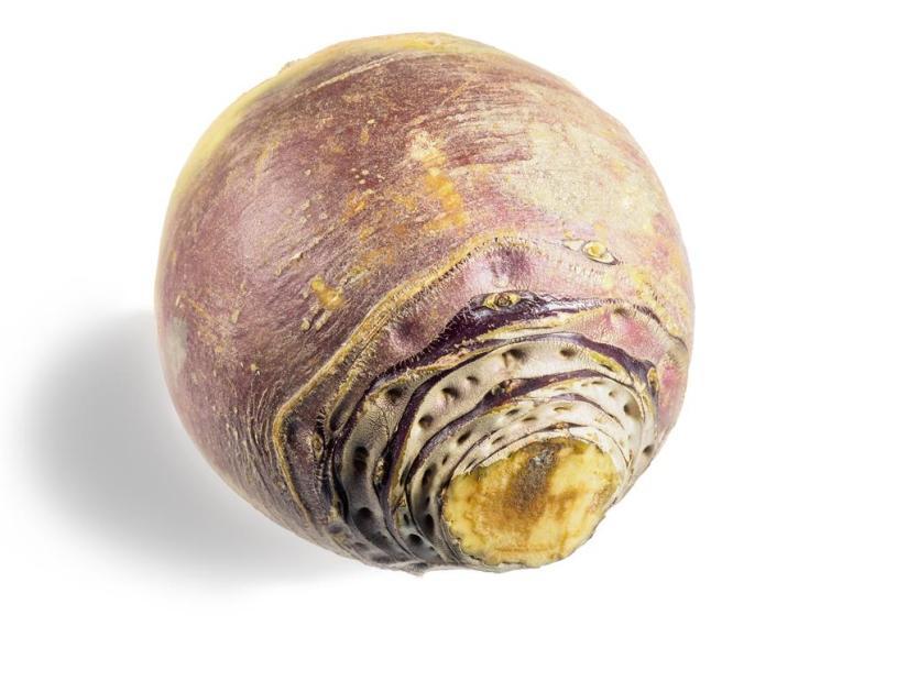 Rutabaga root
