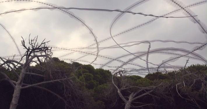 Aves en vuelo por Xavi Bou 10