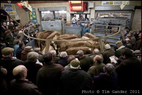 Standerwick Farmers' Market near Frome