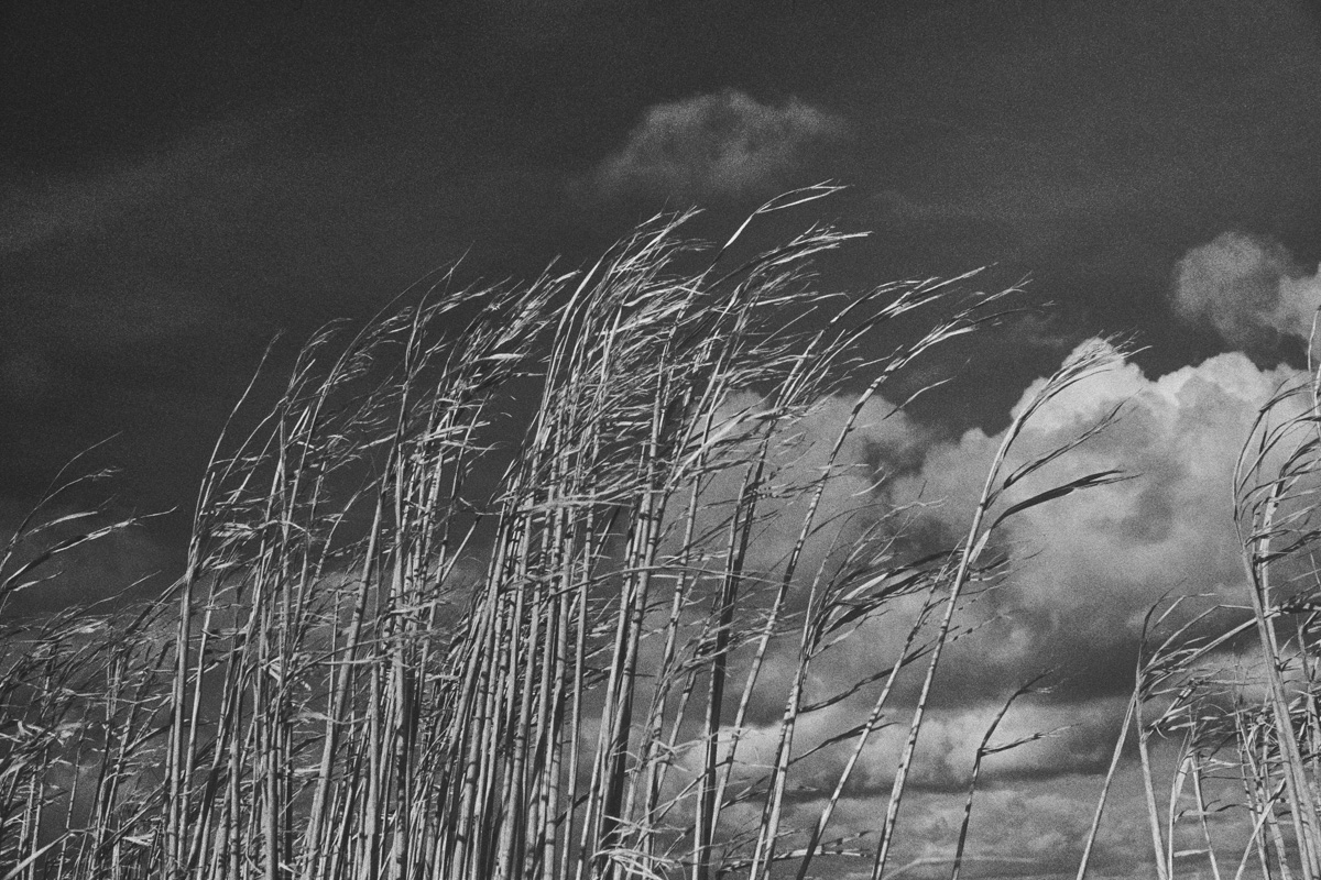 Black and white photo of a grass crop bending in the wind against a sunny sky with some clouds.