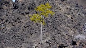 Lava Lands (Bend, Oregon)