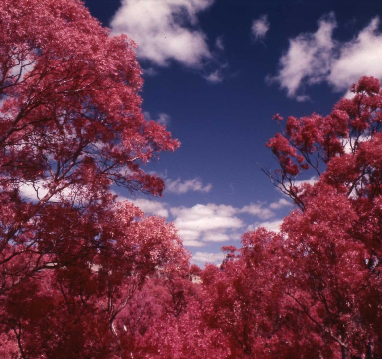 Colour Infra red