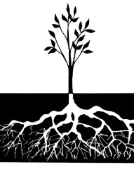 tree_and_roots_text