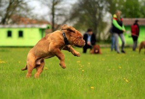 5 Ways to Prevent Injury at Dog Park