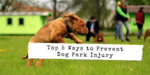 Top Ways to Prevent Injury at the Dog Park