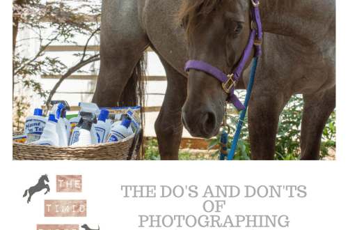 Do's and Don'ts of Photographing Your Horse