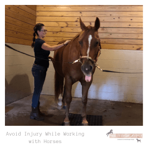 Avoid Injury While Working with Horses Massage