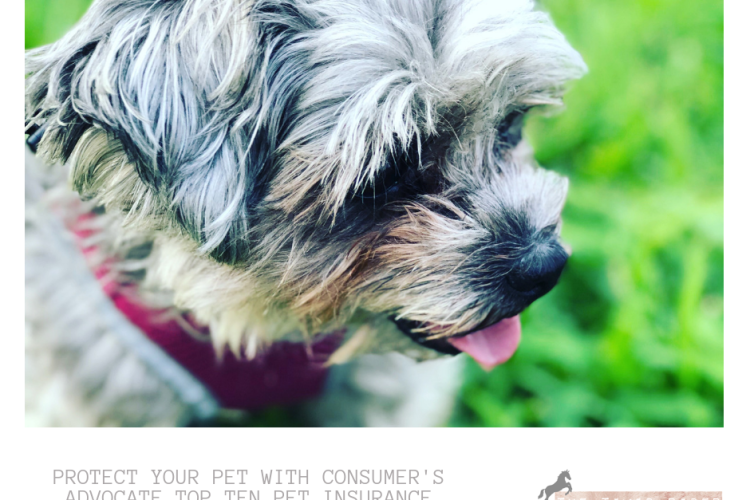 Protect Your Pet with Consumers Advocate Top Ten Pet Insurance 2018