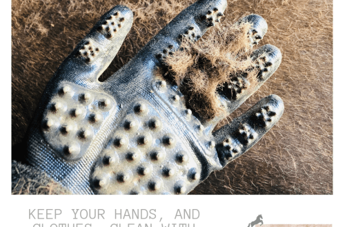 Hands-On Gloves Timid Rider