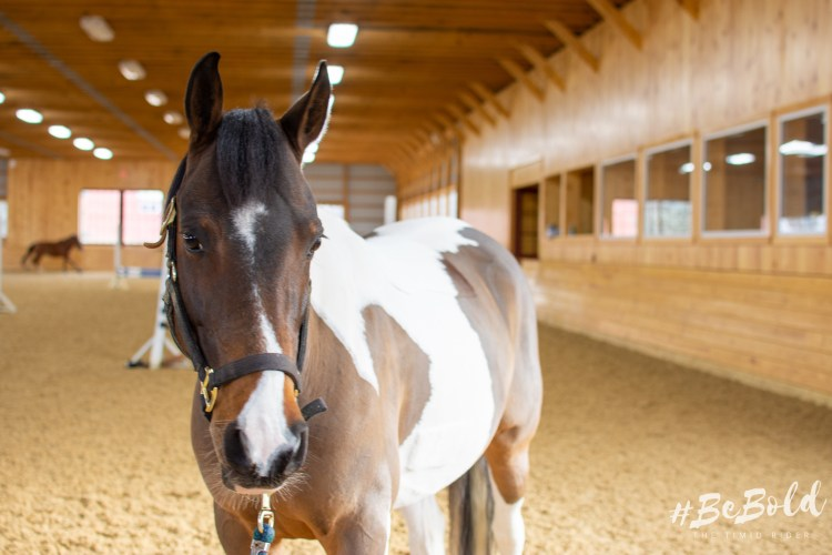 The Tenets of Timidity Confidence Horses