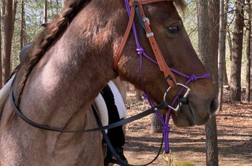 Top Tips to Safely Trail Ride Alone