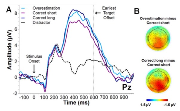 Average ERP amplitudes at electrode Pz, and scalp distributions, split by duration judgement.