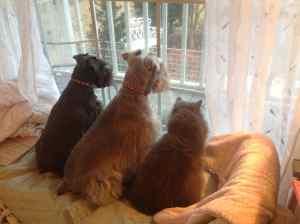 the three in window