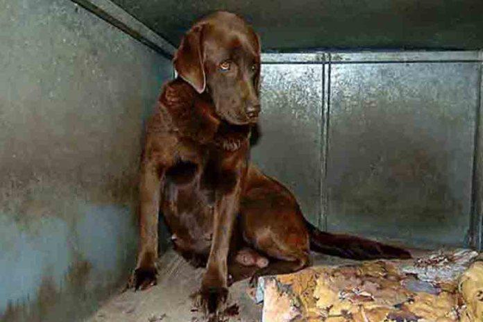 Encuentran 38 cachorros enfermos en una tienda de Barcelona