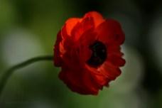 close flower 4