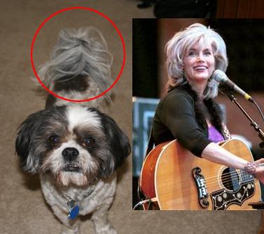 My mother's dog Gonzo...Emmylou Harris.