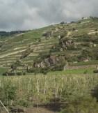 Manicured vineyards