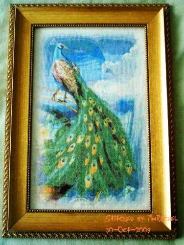QS Peacock