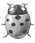 ladybug-details-80s