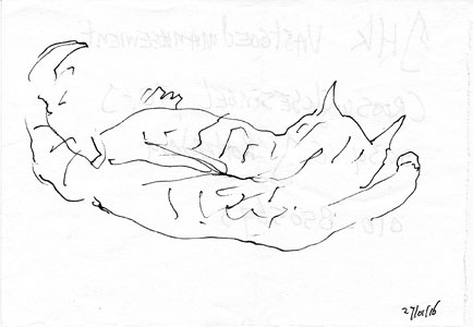 luna-sketch