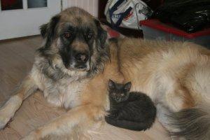 Mason and Bella