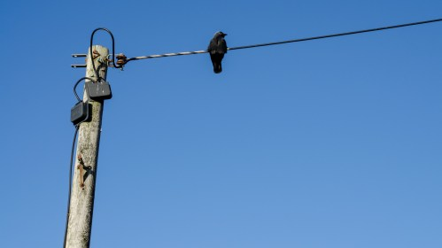 A Crooked Telegraph Pole and Squiggly Wires with a Black Bird Perched on the Wire