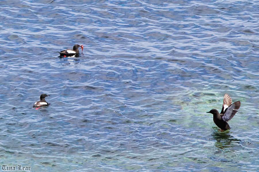 Day Trip to Stroma Island (4/6)