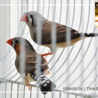 Love Birds in waiting  #FridayFotoFiction Week 9