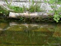 Wasserschildkröten-Futterplatz