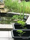 kleine Tomatenpflanzen