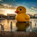 unexpected-art-rubber-duck-fsl